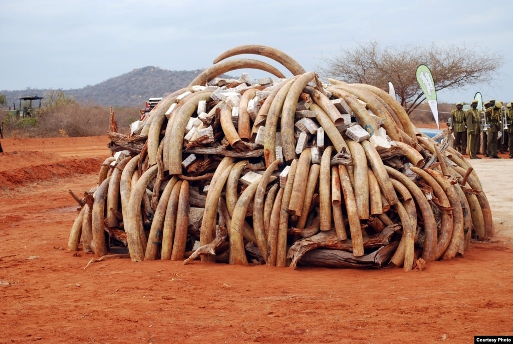 Interpol Conducts 'War' on Poaching in Africa