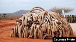 Ivory that was confiscated in Singapore in 2002 and returned to Kenya was burned during the first African Elephant Law Enforcement Celebrations held on July 20, 2011 at Kenya Wildlife Services Field Training School at Manyani, Kenya. (Steve Njumbi / IFAW)