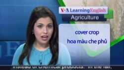 Anh ngữ đặc biệt: Herbicides/Natural Weed Control (VOA-Ag Rep)