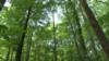 Kad šume ima dovoljno za sve