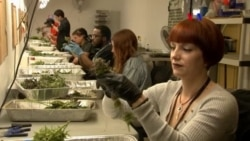 Marihuana con propósitos médicos en auge en EE UU.