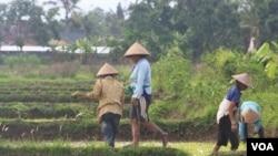 Pemerintah dinilai belum berpihak terhadap petani dalam hal kepemilikan tanah atau lahan (foto: dok).