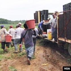 "SAD: Farmeri se moraju oslanjati na ""ilegalce""?"