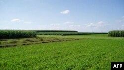 使用化肥和杀虫剂的农田和作物轮作农田之比较