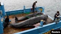 지난 2008년 일본 도쿄 남서부 다이지 항에서 선원들이 고래를 실은 선박을 부두에 대고 있다.