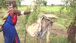 Kenya Donkeys Chinese Medicine -- USAGM
