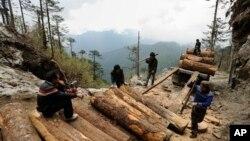 """环保组织""""野生动植物保护国际""""2014年4月1日发布的照片显示,在缅甸克钦邦北部工人正在把非法砍伐的木材装车运走。"""