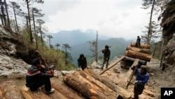 미얀마 카친주 북부 소로 지역의 벌목공들 (자료사진)