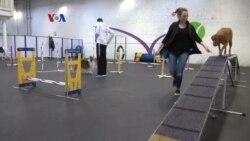 Gym Latih Kebugaran Anjing dan Pelatih