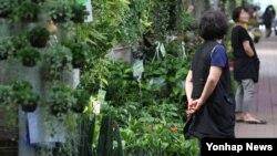 """김영란법 시행 이틀째인 29일 오후 서울 양재동 꽃시장이 한산한 모습을 보이고 있다. 법규에 저촉되지 않는 """"5만원 이하 상품을 만들어도 찾는 사람이 없다""""고 시장 관계자는 밝혔다."""