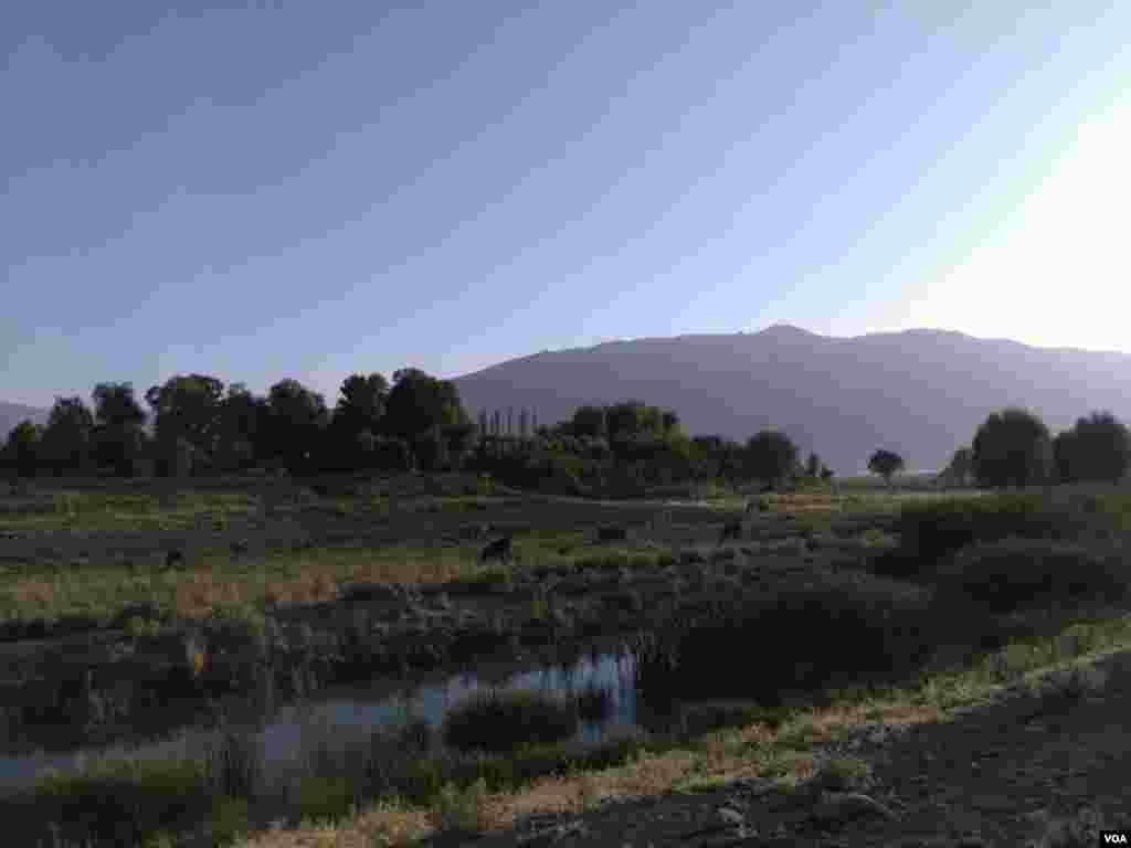 نمایی از شهر گندمان بروجن در استان چهارمحال و بختیاری عکس: ابراهیم اکبری گندمانی(ارسالی از شما)