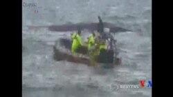 2015-09-06 美國之音視頻新聞:南韓濟州島附近發生沉船事件 至少8人喪生