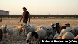 Syrian farmer in Turkey - 3