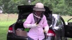 Как спасти медоносных пчел