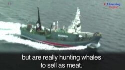 Japanese Whaling Fleet Sets off for Antarctica