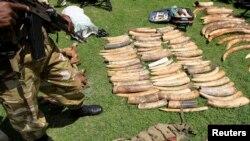 肯尼亞野生動物局2013年1月16日表示,由於東南亞國家象牙的價錢和對象牙的需求有所增加,單單2012年這一年獵殺野生動物的犯罪活動所造成的損失上升到有史以來的新高記錄。