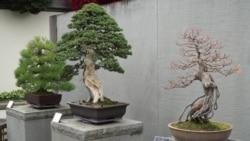 《百样人生》:美国植物园里的盆栽艺术