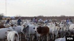 La economía uruguaya, que cerrará el año con 8% de crecimiento, basa su desarrollo en las exportaciones del sector rural.