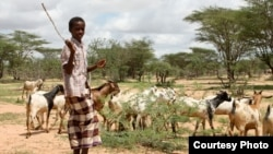 The people of northern Kenya have traditionally been pastoralists, since the land has long been considered too dry for farming, Nov. 28, 2014. (Hilary Heuler/VOA)