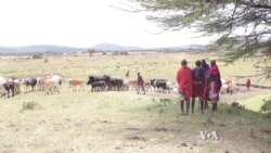 Masai Demand Tanzanian Government Reject Plans for Hunting Reserve