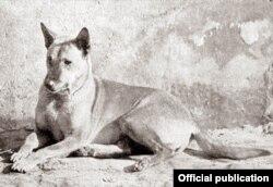 Chó Phú Quốc cái tên là Can-Le của Hầu tước Barthelémy (H.C. Brooke)