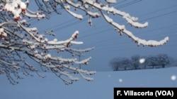 Las flores rojas de un árbol luchan por salir en el comienzo de la primavera en Gaithersburg, Maryland, donde una tormenta de nieve ha cubierto las posibilidades de la floración.