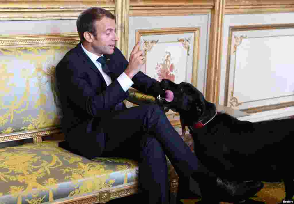 French president Emmanuel Macron gestures towards his dog Nemo during a meeting with German Vice Chancellor and German Foreign Minister at the Elysee Palace in Paris, France, August 30, 2017.