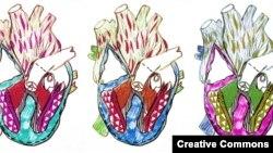 Hearts illustration by Emily Rachel Martin