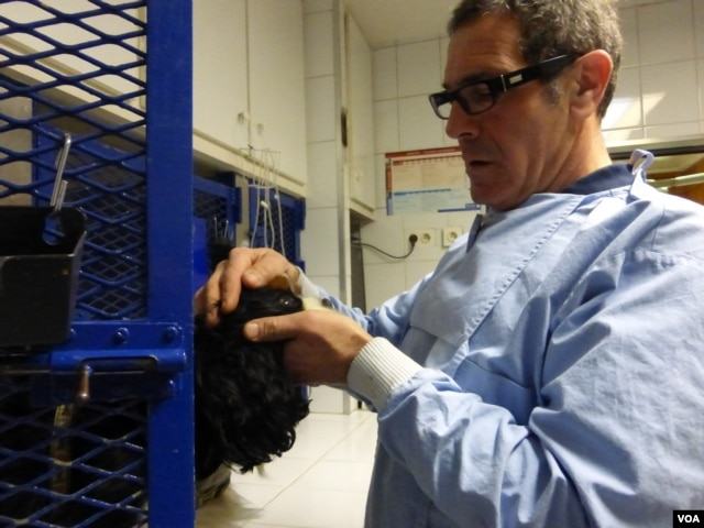 Veterinarian Dr. Jean-Yves Routier examines a dog at his clinic in Noisy le Grand outside Paris, Feb. 12, 2014. (Lisa Bryant/VOA)