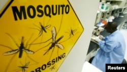 FILE - A sign at the Sanaria Inc. facility in Rockville, Maryland, where mosquitos are dissected for vaccine research. (Reuters)