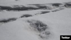 Yeti footprint?