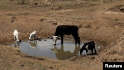 The drought has also gripped some countries in southern Africa.