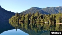 Los Alerces National Park: Lake environment with temperate Alerce forest. (Ricardo Villalba)