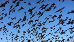 Quiz - Six New Coronaviruses Found in Bats in Myanmar