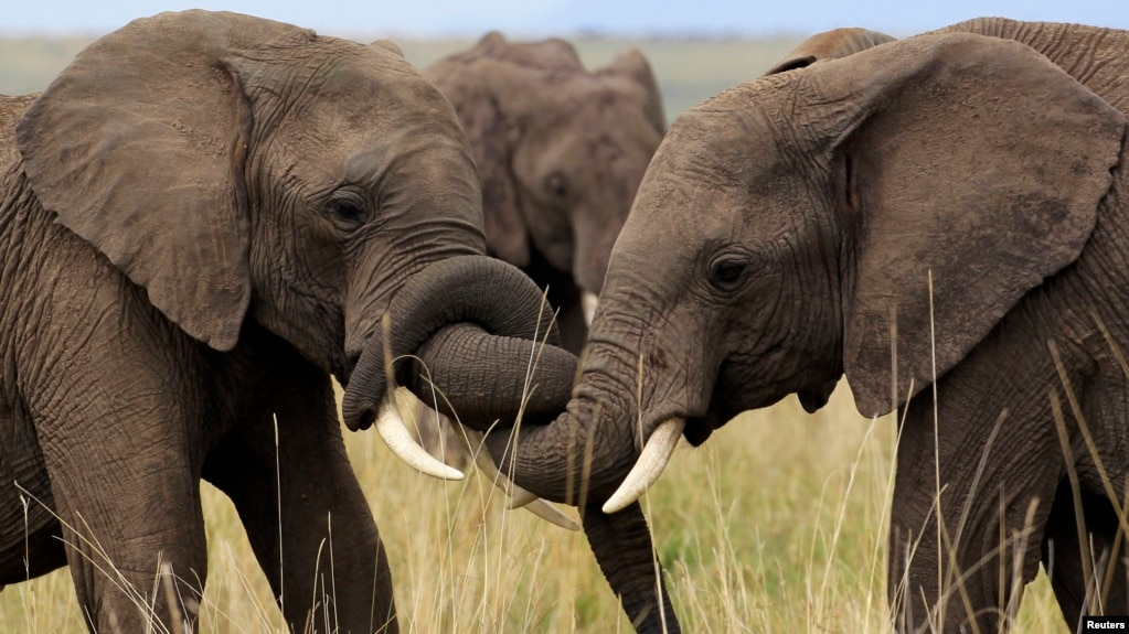 Super African Elephants, The Information Revolution and Nigeria's Safe Water MC26