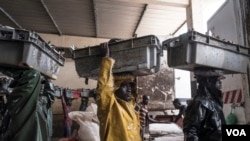 Penangkapan ikan berlebihan di perairan Afrika Barat telah menghabiskan persediaan ikan berkualitas tinggi, seperti kerapu lokal yang dikenal sebagai thiof di Senegal. Thiof dihormati dalam masakan dan budaya. Joal, Senegal, 29 Mei 2017. (R. Shryock / VOA))