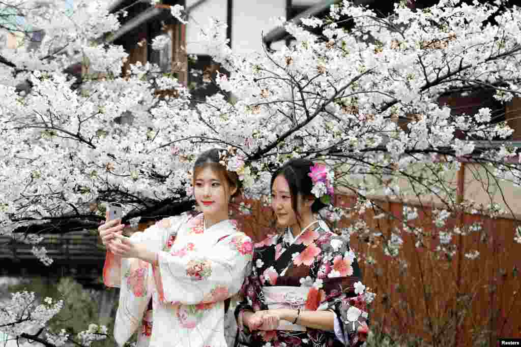 Women wearing Kimonos pose for a photo with blooming cherry blossoms in Kyoto, Japan.