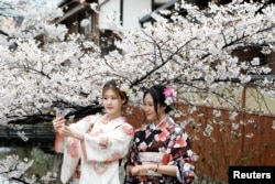 FILE - Women wearing Kimonos pose for a souvenir photo with blooming cherry blossoms in Kyoto, Japan.