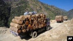 """环保组织""""野生动植物保护国际""""2014年4月1日发布的照片显示,在2011年1月23日缅甸克钦邦北部的工人正在把非法砍伐的木材装车运往中国。"""