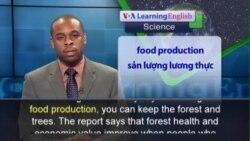 Anh ngữ đặc biệt: Forest Food (VOA)