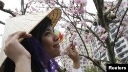 Phụ nữ Việt chụp hình bên cạnh hoa anh đào tại Hà Nội.