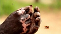 Leprosy in Malawi