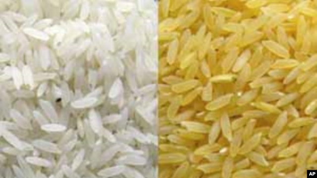 Golden Rice gets its yellow color from beta-carotene, or provitamin A, inserted into the strain of rice to enhance its nutrition value (Golden Rice Project).
