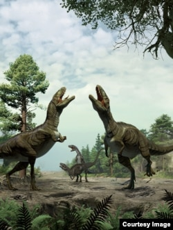This artwork by Lida Xing and Yujiang Han depicts dinosaurs engaged in sexual display activity. (Credit: University of Colorado-Denver)