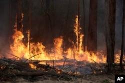 Sebuah kebakaran di dekat Bodalla, Australia, Minggu, 12 Januari 2020. (Foto: AP)