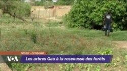 Les arbres Gao à la ressources des forêts