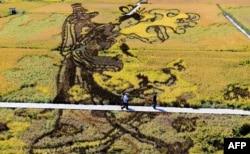 """在中国辽宁省沈阳的收获季节,用各种稻谷组成的3D稻田画 """"天女散花"""" (2017年9月20日)。该设计旨在促进该地区的旅游业,提高当地农民的收入。"""