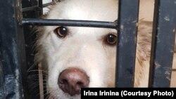 Jedan od pasa o kojima se brine aktivistica Ljudmila Jevdokimova u Samari