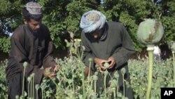 """سرحدات نیمروز در مقابل قاچاق مواد مخدر با کشور های همسایه """"باز است"""""""