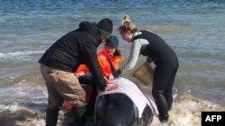 Para relawan mencoba menyelamatkan paus di Pelabuhan Macquarie, Tasmania, Australia, Selasa, 22 September 2020. (Foto: Reuters)